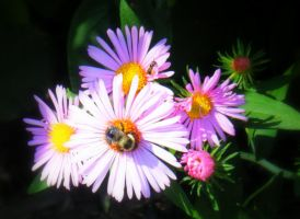 SPring-bumble bee by sara12492