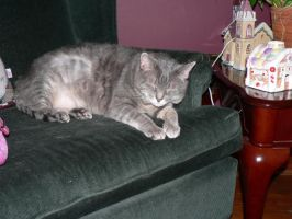 Here casey 2 on the chair by butterflywoman04