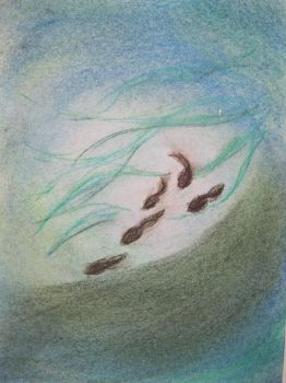 The tadpoles by Fingolfin168