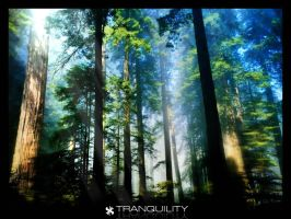 Tranquility by nax3t