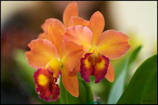 She Loves To Shoot Orchids by shutterbugmom