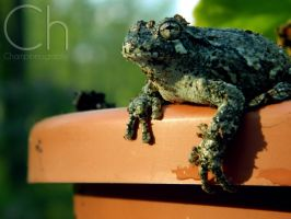 Toad 1 by Champineography