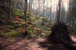 Sleepy forest by Luisa-Puschelova-7