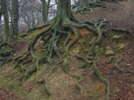 Tree Roots by PaulineMoss