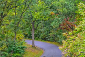 Gettysburg Tree path seen from Tower by ENT2PRI9SE