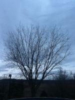 after noon sky with Tree by kaitlynnasslebell