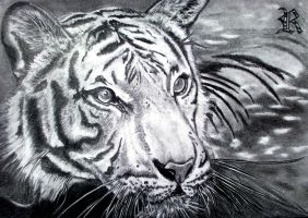 Tiger in the water.. for CosmicSketch... by RealityBitez