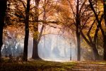 Autumn Leaving by drkshp