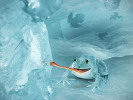 Frog in Ice by ladida2010