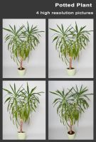 Potted Plant Stock (Yucca Palm) by pixelmixtur-stocks