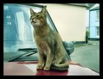 Cat On A Car by x-Musty-x
