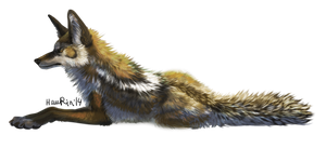 Coyote by HauRin