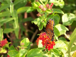 Butterfly Garden 1 by Fully-Stocked