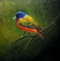 Painted Bunting by faedri
