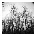 2014-332 My friends, the trees - scan0108 by pearwood