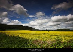 Rapefield - Malvern by DL-Photography