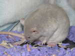 Going into labor by ratpackrattery