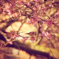 Blushing Blossoms Unite by SafetyInNumbness