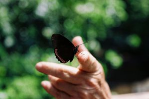 ButterflyAndHand by angelelectrico