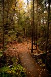 Beaver-Pond Trail by yaelperez