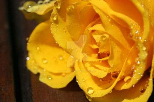 yellow V by Gothic-Dreamscapes