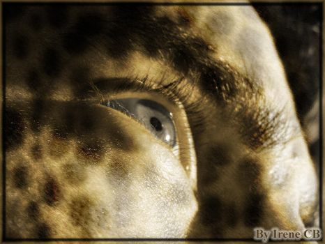 Leopard Eye by irenillacb