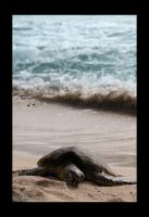 Green Sea Turtle by plutoplus1