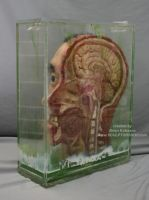 Preserved Human head sagittal cut Oddities by Sculptured