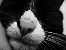 whiskers. by karo-pawlak