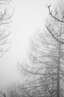 Trees in black and white by cosboom