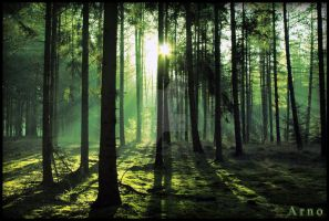 Steele Forest by x---A-R-N-O---x