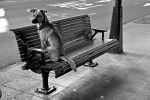 Dog on a Bench by jemapellenicoletta