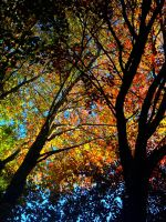 the many hues of fall by prettyflour