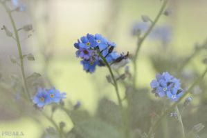 Forget Me Not by Escara40