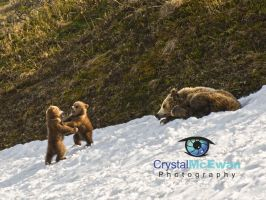 Grizzly Cubs Playing by Crystalsm