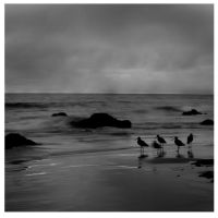 birds by dskphotography
