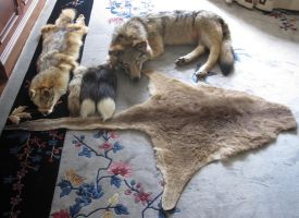 My Fur Collection by ShroudofShadows
