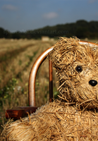 Hay there,Bear by SpAmSaLoT