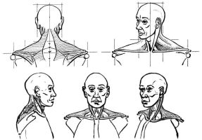 Neck Muscles by spacejack