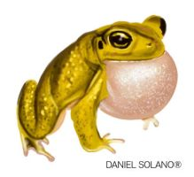 Yellow toad by Tolomuco