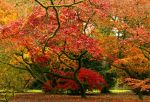Gnarled Autumn by parallel-pam