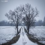 Snowed again by NorbertKocsis