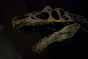T REX by CorazondeDios