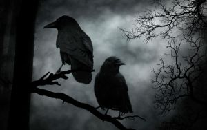 Crow by Vickie666