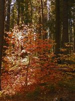 Autumn Light II by Synaptica