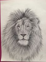 lion by 1997girl