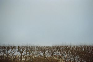 Paris: Arbres de la Mort, I by neuroplasticcreative