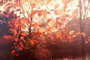 Autumn Signs 2 by AtelierAntares