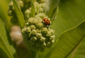 Lady Bug June 2014 by toshema