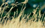 the grass by peterish